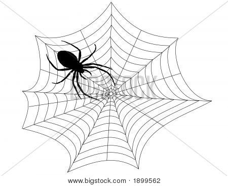 Spider In Web Illustration