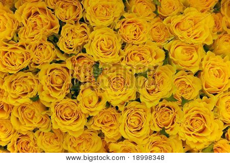 Bunch of yellow roses.