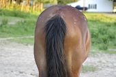 stock photo of horses ass  - view of a horse - JPG