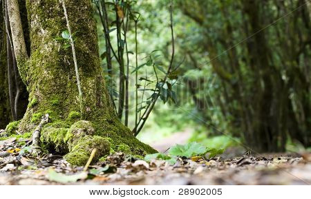 Tree trunk in a soft focused landscape.