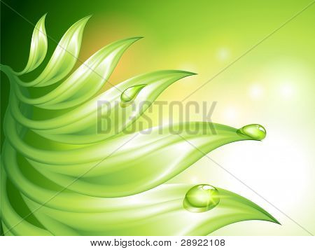 Abstract green background with leaves and water drops (no mesh)