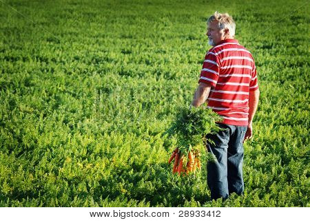 photo of a farmer in a red shirt overlooking his carrot crop