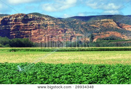 potato field against mountains