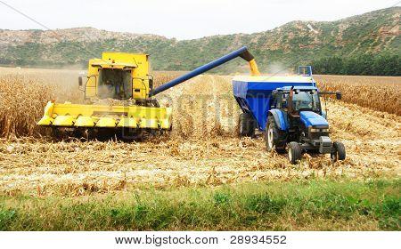 Combine  harvesting a maize field