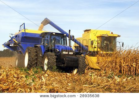 Yellow combine and tractor harvesting maize on the field