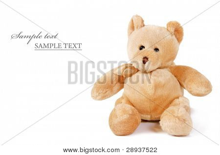 a Cuddly teddy bear on a white background with space for text