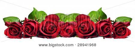 Seven red roses on a white background with space for text