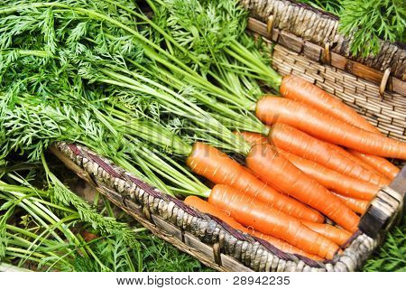 Freshly picked carrots in a carrot field