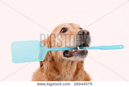 dog with flyswatter
