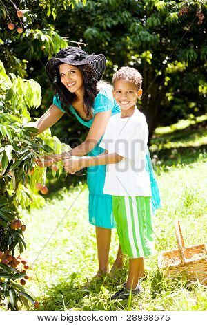 happy latin american mother and son picking litchis