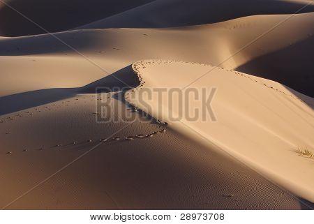 Sands dune on gobi desert in Mongolia