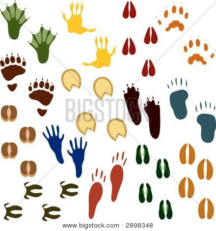 Fourteen Sets Of Animal Tracks