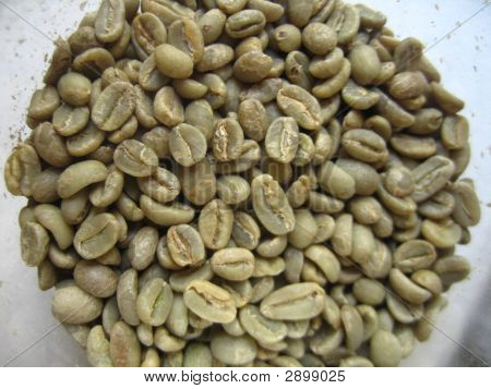 Coffee Beans In The Raw