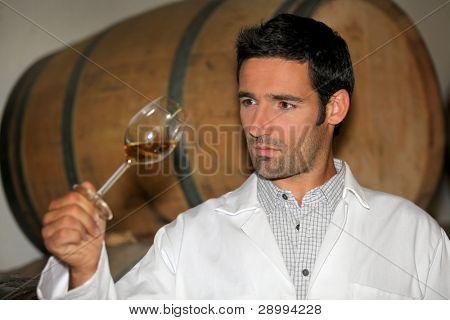 Mann tasting Wein