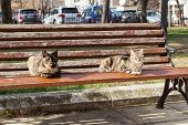 Two Cats Bask In The Sun On A Bench In A City Public Park. The Cat Is Sitting On The Bench. City Hom poster