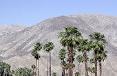 Palm Desert - Palm trees and mountains beckon visitors in this California desert town.