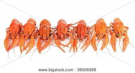 Tasty boiled crayfishes isolated on white