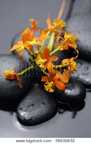 Still life with branch orange orchid with therapy stones