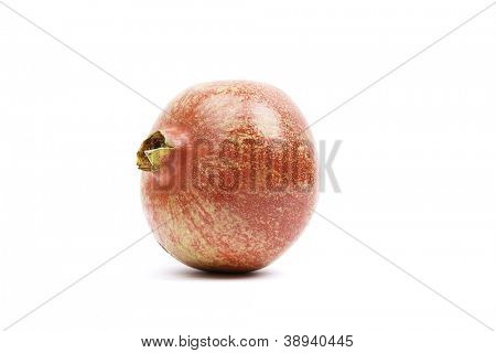 the pomegranate fruit