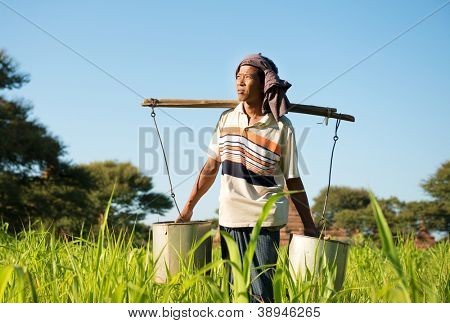 Portrait of a Burmese farmer watering plant