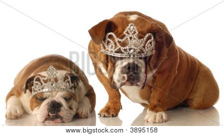 Two Bulldogs With Tiaras