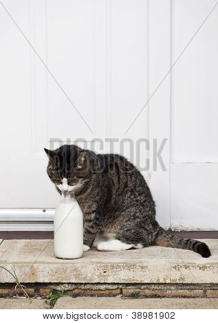 0588 Cat With Milk Bottle