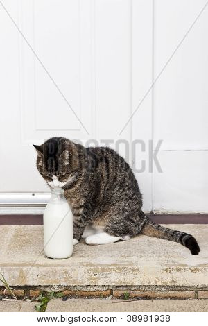 0594 Cat With Milk Bottle