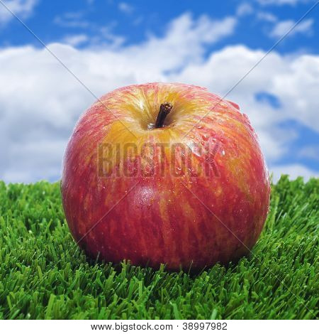closeup of a fresh red apple on the grass