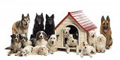stock photo of belgian shepherd  - Large group of dogs in and surrounding a kennel against white background - JPG