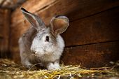 picture of rabbit hutch  - Cute rabbit popping out of a hutch  - JPG