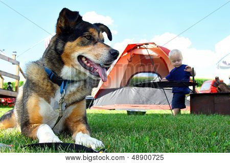 Friendly Dog Camping