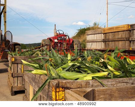 Corn And Farm Tractors