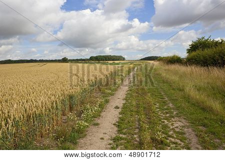 Summer Wheat Field Landscape