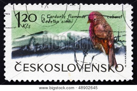Postage Stamp Czechoslovakia 1965 Lesser Redpoll, Bird