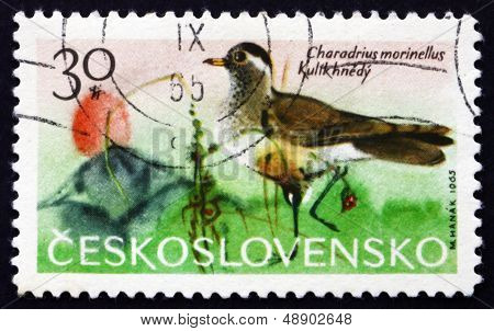 Postage Stamp Czechoslovakia 1965 Dotterel, Wader Bird