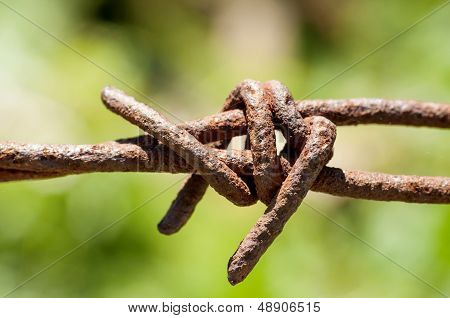 Rusty barbed wire on green background closeup