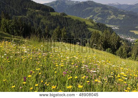 Wild flowers in the German alps, Bavaria