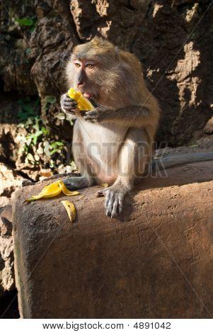 Sitting On The Stone Monkey Eating Banana