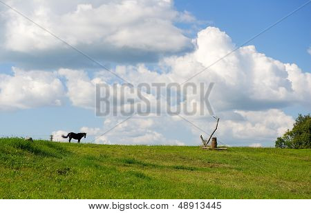 One horse in the field, clouds formation on summer evening, idyllic view with horse far away