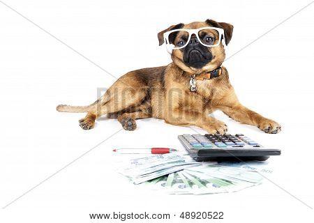 Petit Brabant accountant
