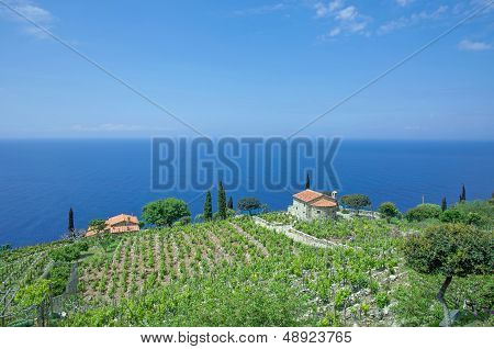 View from Tourist Route,Elba Island,Italy