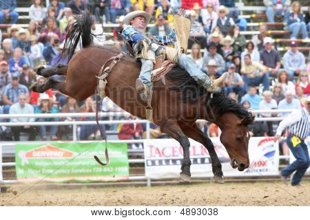 Rodeo - Bareback Cowboy