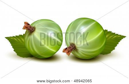Two gooseberries isolated on white. Vector