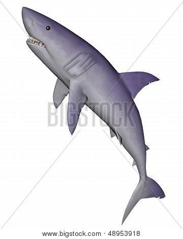Shark - 3D render