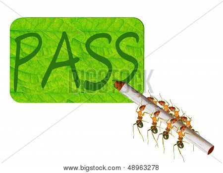 Ants Writing