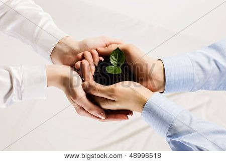 Close up of businessmen hands with sprout in palms