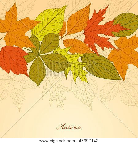 Autumn background with colorful leafs
