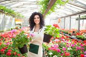 image of greenhouse  - Beautiful woman holding flower pots - JPG