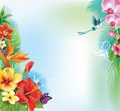picture of hibiscus flower  - Background from tropical flowers and leaves - JPG
