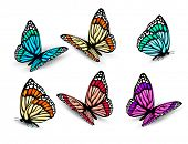stock photo of blue animal  - Set of realistic colorful butterflies - JPG